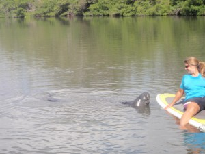 stand up paddle boarding with the manatee