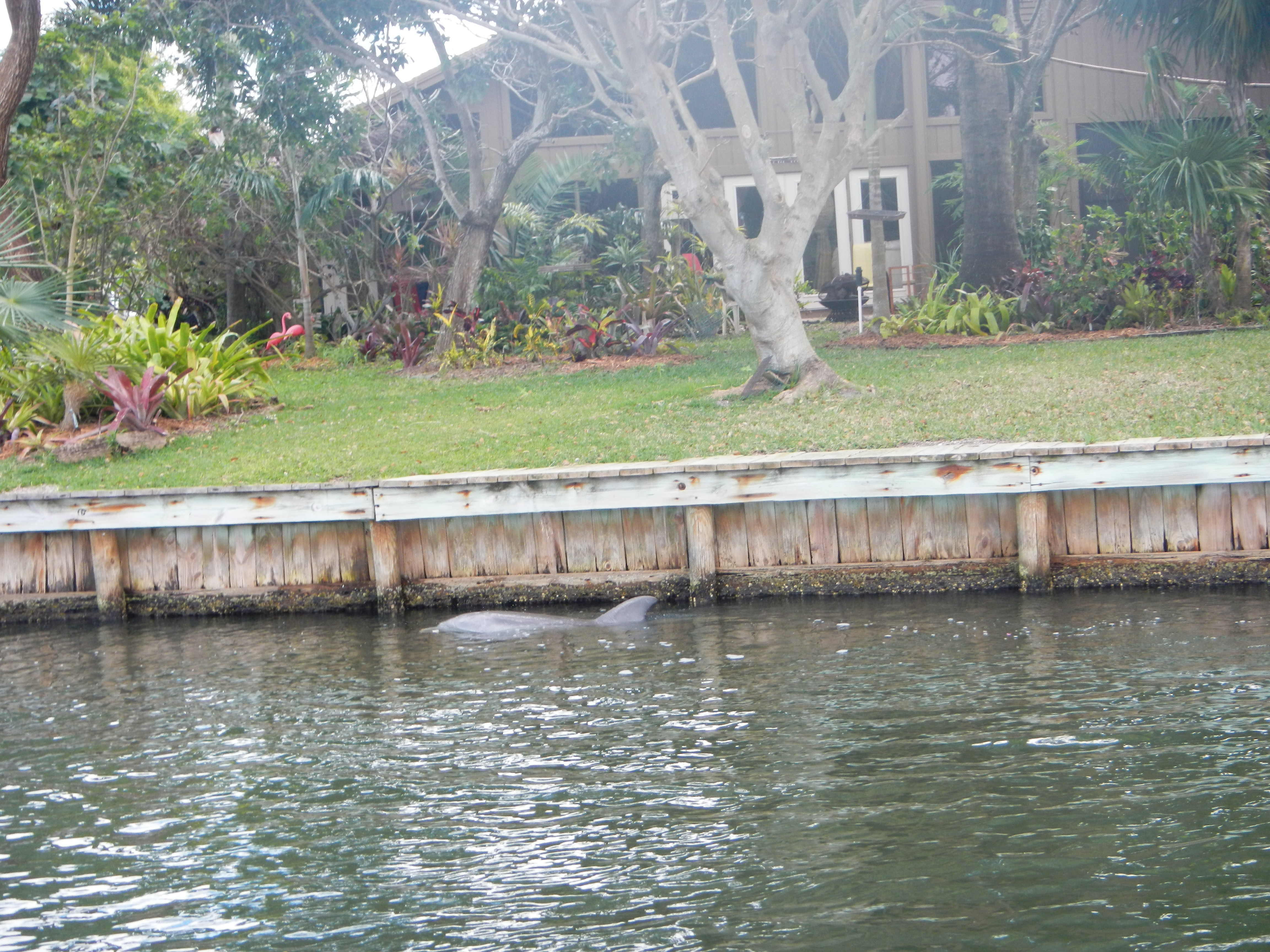 Dolphin swimming by while we were on our stand up paddle boards