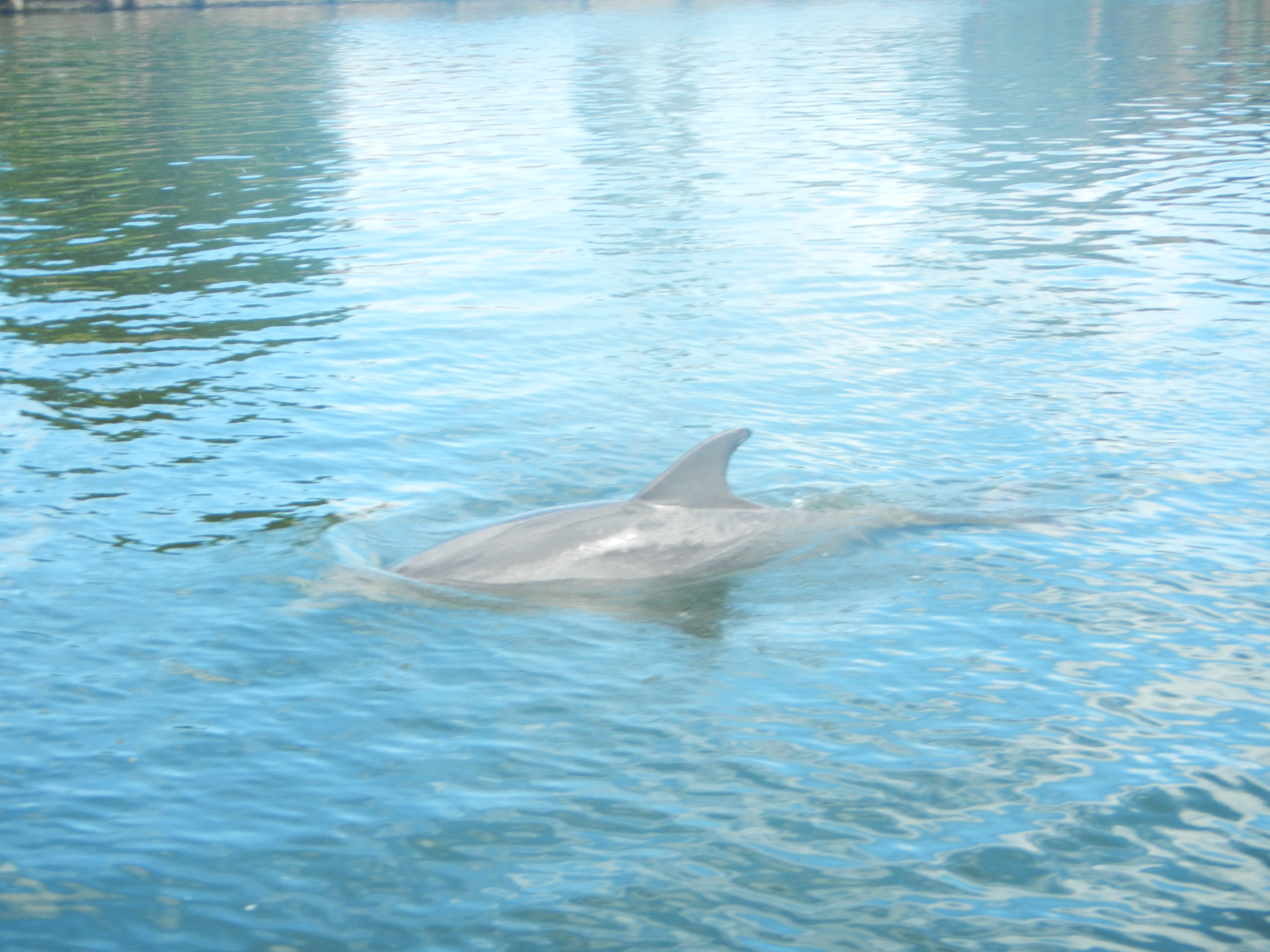 Beached dolphins - photo#35